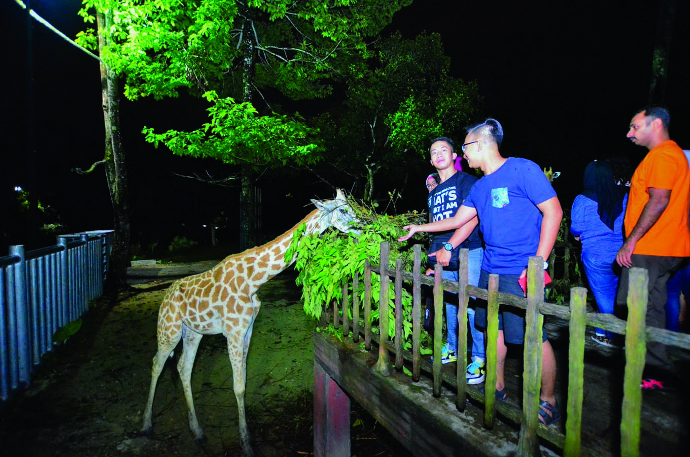 End your night with some up-close encounters! (Image Credit: Gaya Travel Magazine)