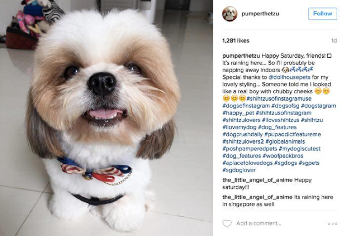 Hashtags To Make Your Dog Famous